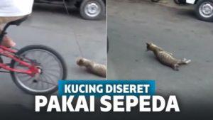 Sadis! Pria Ini Ikat Leher Kucing Pakai Tali, Diseret Sambil Bersepeda hingga Tak Berdaya