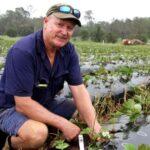 Dibuka Lowongan Jadi Petani Stroberi di Australia, Upah Rp 1 Miliar
